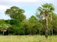 bosque-nativo